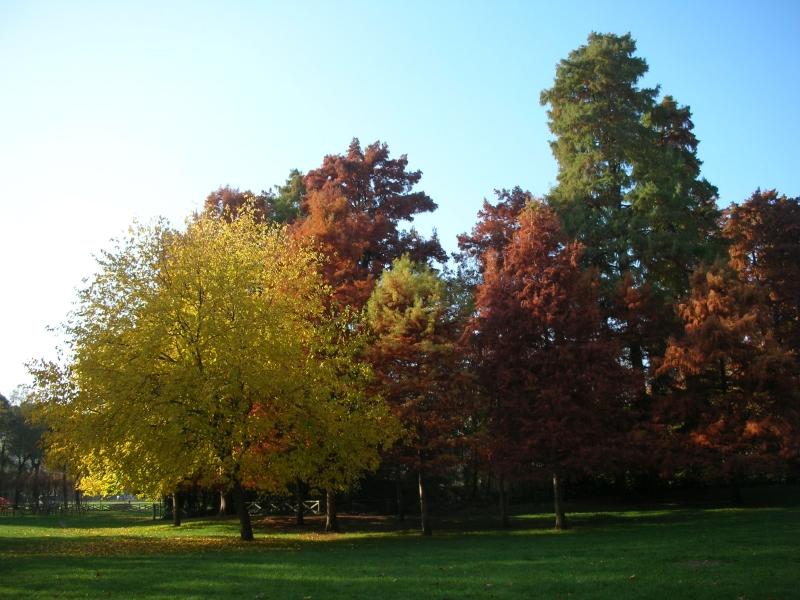 Festa degli alberi 2012 bologna incontriamo gli alberi - Alberi adatti per viali ...